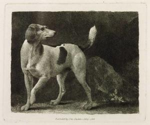 George Stubbs - a null