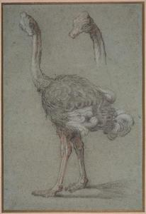 Jean-Baptiste Oudry - 二つ 研究 の `ostrich`