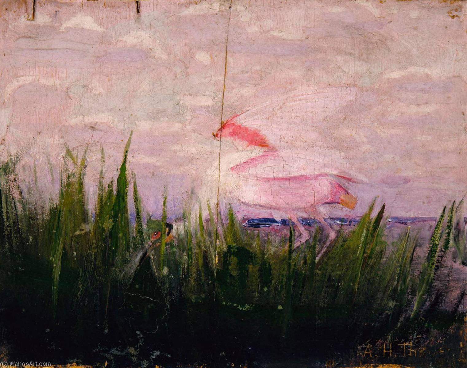 roseate spoonbill , 以下のための研究 本 隠します 着色 教会に 動物 王国, 原油 バイ Abbott Handerson Thayer (1849-1921, United States)